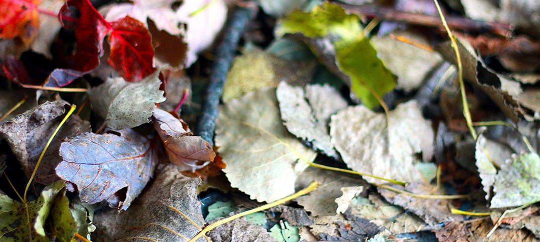 L'automne me rend un peu down
