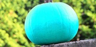 citrouilles turquoise