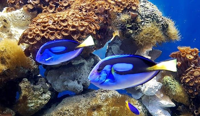 aquarium du québec poissons